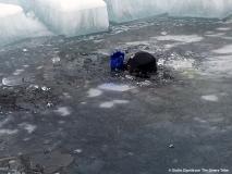 IceDive 1