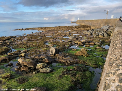 01 - Farne Islands